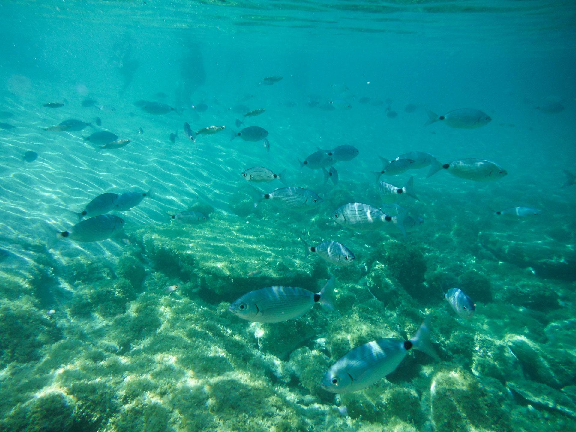 immersioni subaquee in Sardegna